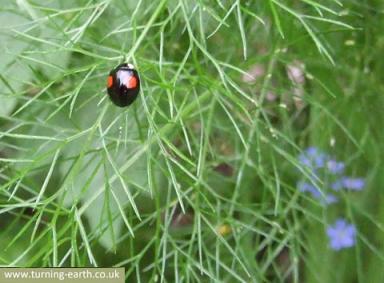 ladybird-290414.jpg