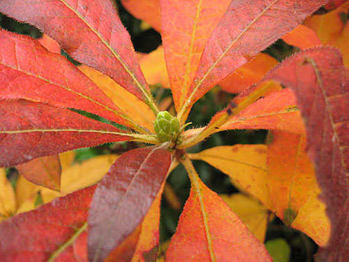 Red and orange leaves, autumn colour