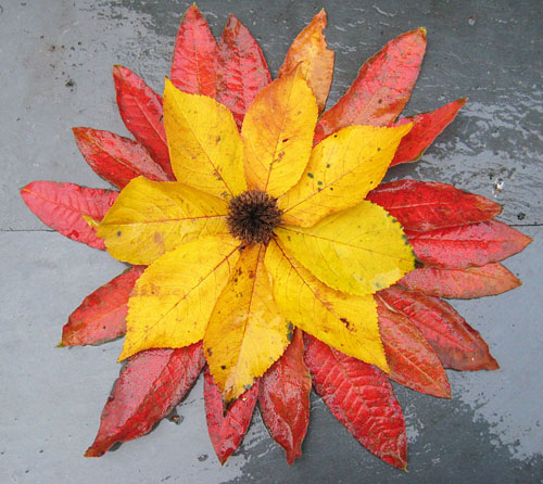 Red and yellow leaves of autumn, in a circle, like a flower