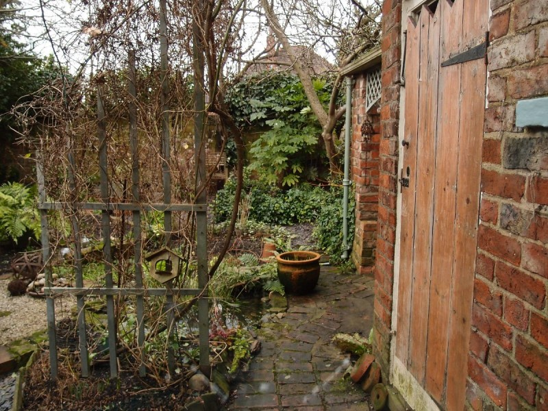Garden view from window, 25 Jan 2016