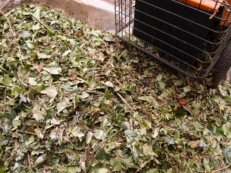 Shredder output: large piles of evergreen foliage and twiggy stuff