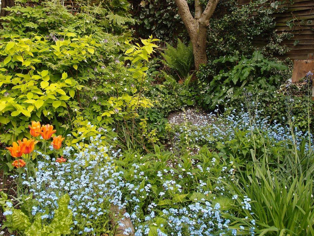 Garden view, looking towards 'Woodland Corner', 17 May 2016