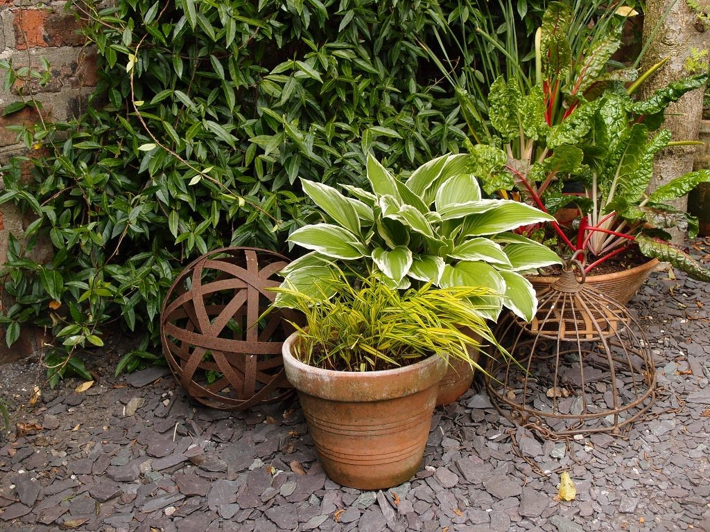 Grouped pots and lovely rusty things, 17 May 2016
