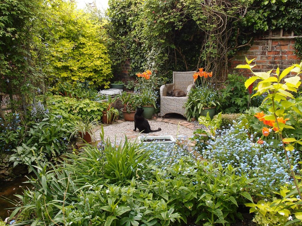 Garden view, with cats, 17 May 2016