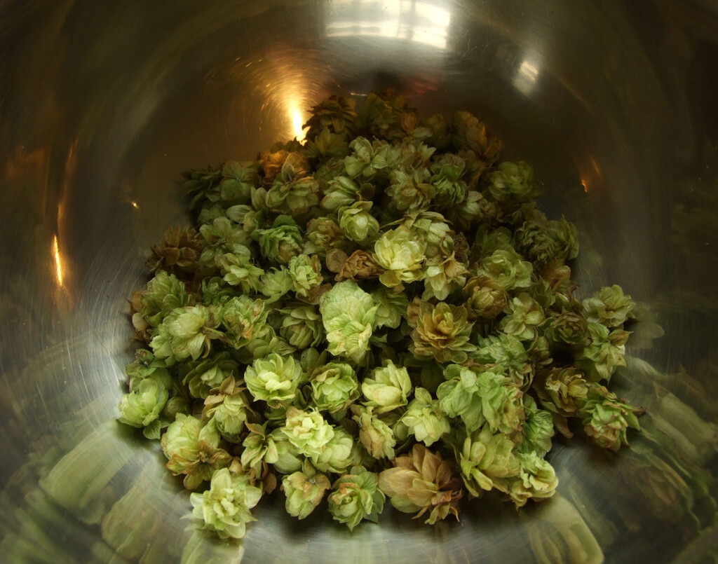 Hop cones in metal bowl